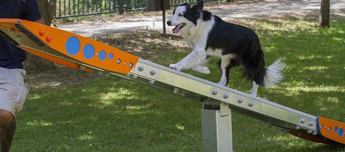 Beneficios de un parque canino para nuestras mascotas