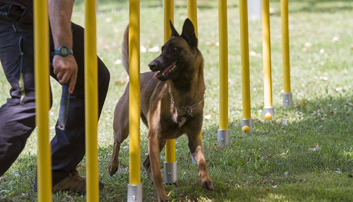 Parques caninos de Krealia